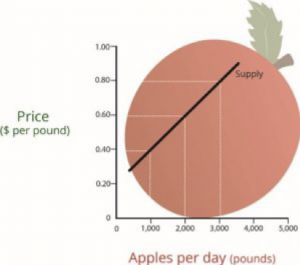 This line graph demonstrates the relationship between the price of apples compared to the amount of apples being produced/supplied each day.  As the price per pound increases, the number of pounds supplied increases.
